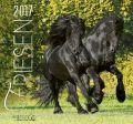 BOISELLE ��������2017 L������ FRIESEN HORSES