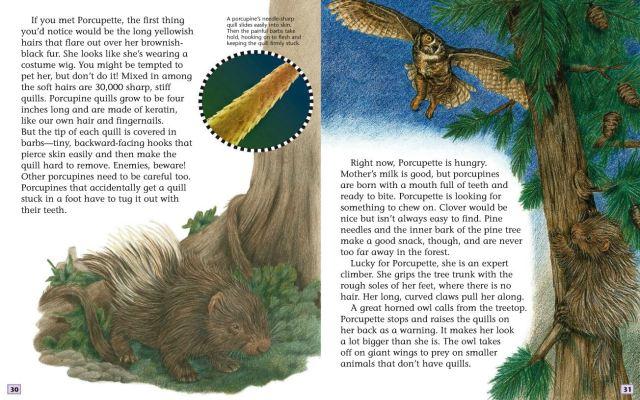 英語幼児自然科学絵本