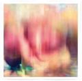 images / akisai