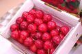 大将錦通販。山形さくらんぼ販売で最後に収穫される桜桃 500gバラ詰め L〜2L