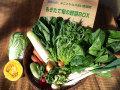 有機栽培旬の野菜セット