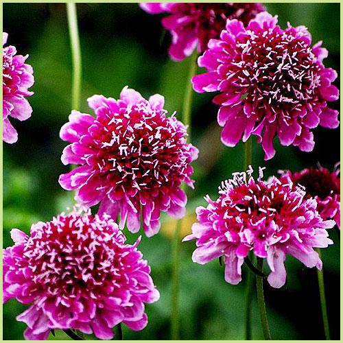 Ki blooms 055 011