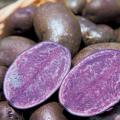 種芋(タネイモ)の販売店【花育通販】「じゃがいも・シャドークイーンの種いも」を販売
