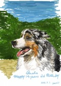 愛犬の肖像画「オーストラリアンシェパード」