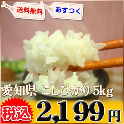 愛知県 1等米 こしひかり 白米 5kg×1 平成25年産 ※新、消費税率8%を含む価格です。