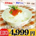 山形県 新米 1等米 つや姫 白米か玄米 5kg×2 平成25年産 ※新、消費税率8%を含む価格です。