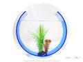 【AGE】カラーライン アクアリウム / アクリル水槽 <丸> Lサイズ 【37×11×37cm】