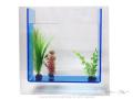 【AGE】カラーライン アクアリウム / アクリル水槽 <角> Lサイズ 【35×11×35cm】