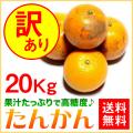 奄美大島たんかん20kg/訳ありタンカン/ご家庭用/送料無料