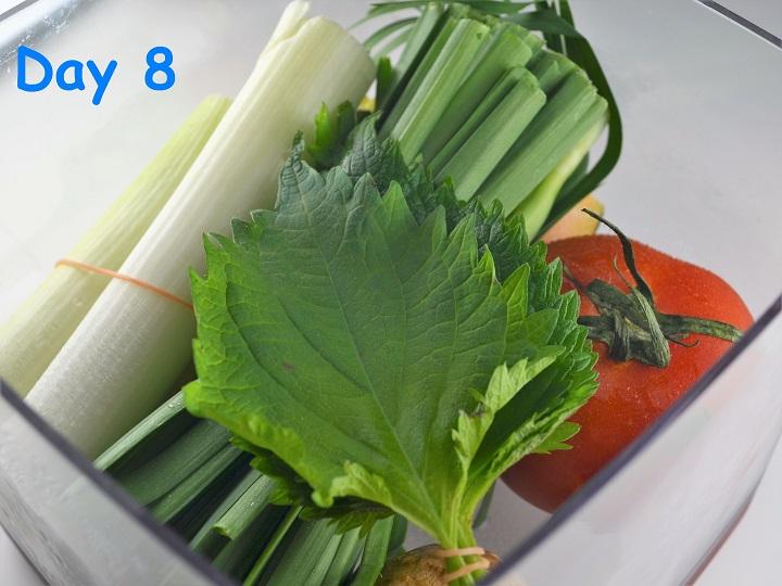 野菜8日目1