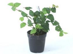 オマケC ミニ観葉植物セット※単体でのご購入はご遠慮下さい。
