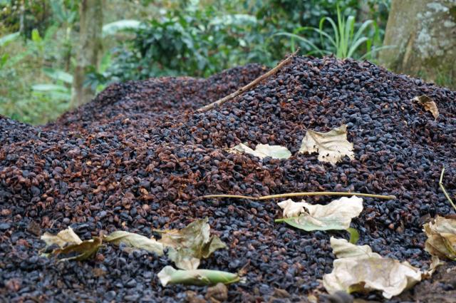 除去した果肉を使って堆肥を作っています。