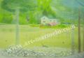 大西秀美の版画「湖畔のシンフォニー」