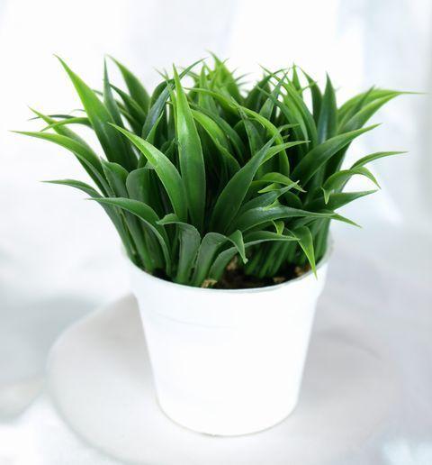 【造花 観葉植物】ワイルドリーフミニポット