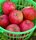 朝日町産ふじりんご5kgバラ詰