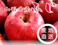 山形県産ふじりんご5kgバラ詰め