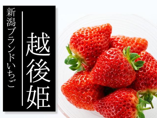 【送料無料】越後姫 新潟のブランドいちご 800g前後 生産者直売  - あぐりステーションみのり