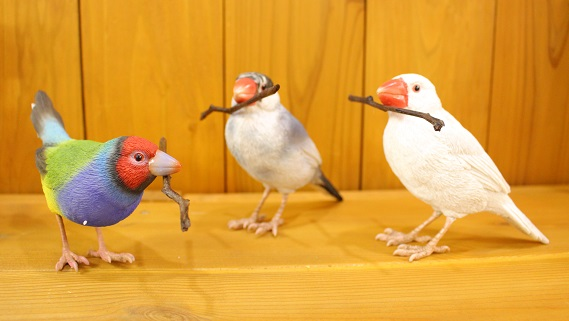 バーディビル コキンチョウ ごま塩文鳥 白文鳥