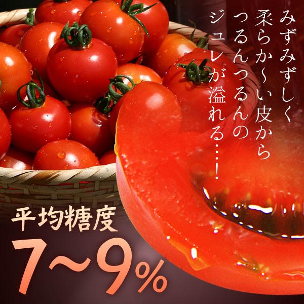フルーツトマト_カート02