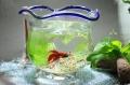 夏のグラスアクアリウム 〜金魚鉢〜