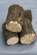 上質クヌギ産卵木直径7センチ以上物