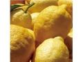 有機JAS認証 イタリアンジェラート レモンソルベ(オーガニックジェラート・アイス) デメター認証 イタリア産[125ml]【冷凍便】