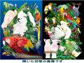 【ぴよぴよブランド】A4クリアファイル/インコ・多種◆クロネコDM便可能
