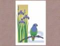 【あトリえ】鳥と花のポストカード0405/アケボノインコ◆クロネコDM便可能