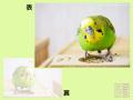 【だが屋】ポストカード/セキセイインコ10・ありがとう。◆クロネコDM便可能