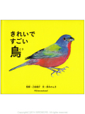 9994999【パイインターナショナル】きれいですごい鳥◆クロネコDM便可能