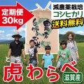 定期便 減農薬コシヒカリ 虎わらべ 30kgコース