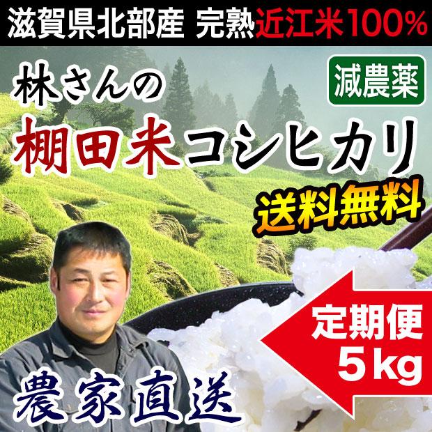棚田米コシヒカリ 5kg 定期購入