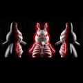 Frank Kozik x Kidrobot��Skelton Labbit�ʥ�����ȥ�ӥåȡˡ�Something's Under the Bed Edition