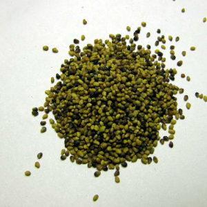 生牧草 赤クローバーの種