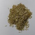 生牧草 オーチャードグラスの種