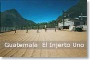 ガテマラ エルインフェルト農園