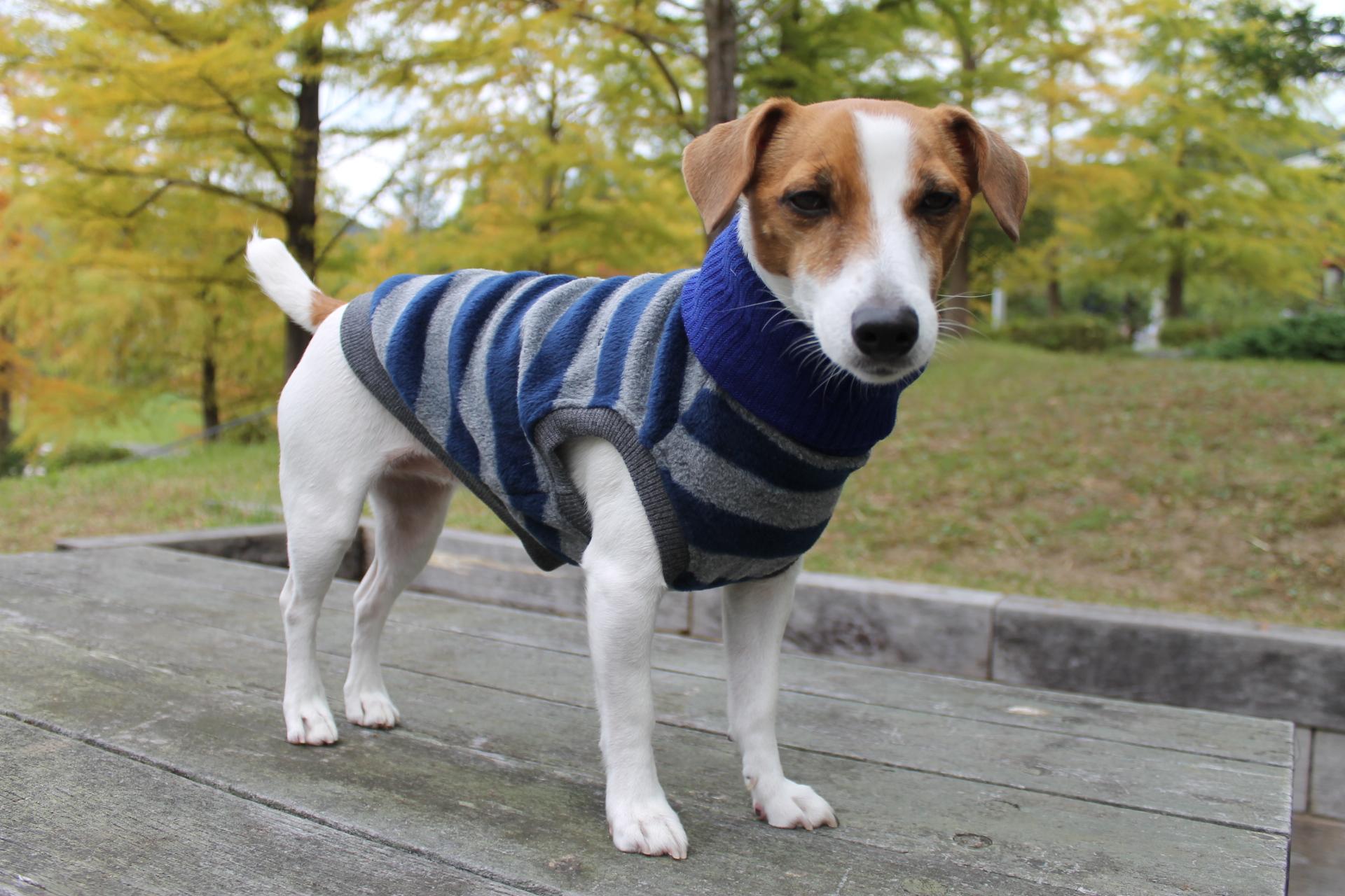<犬と生活>20%OFF!柔らかなタートルネックのフリースボーダー 4号(無料お名前刺繍入れ可)