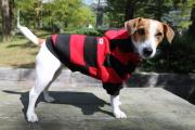 <犬と生活>20%OFF!ニット地の太目ボーダー柄 ボーダーパーカー4号(無料お名前刺繍入れ可)