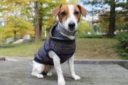 <犬と生活>20%OFF!フードにプリントが施された ネップボーダーパーカー 4号(無料お名前刺繍入れ可)