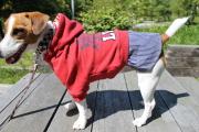 <犬と生活>20%OFF!お転婆ガールのアメリカンカジュアル☆カレッジワンピ 4号(無料お名前刺繍入れ可)