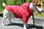 <犬と生活>機能性が高く着せやすいオシャレなレインパーカドット