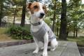 <犬と生活>20%OFF!首元スッキリVネック ニットベスト 4号(無料お名前刺繍入れ可)
