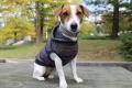 <犬と生活>20%OFF!フードにプリントが施された ネップボーダーパーカー 5号(無料お名前刺繍入れ可)