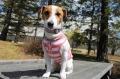 <犬と生活>涼しげなバンダナボーダータンク 4号(無料お名前刺繍入れ可)