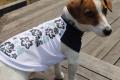 <犬と生活>60%OFFハワイアンプリントがオシャレ♪クールハワイアンタンク〜吸水・冷感・速乾生地使用〜 5号
