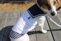 <犬と生活>セーラーカラーがキュート☆クールセーラータンク(接触冷感生地使用) 5号(無料お名前刺繍入れ可)