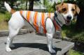 <犬と生活>色がきれいなポコポコマルチボーダータンク 5号(無料お名前刺繍入れ可)