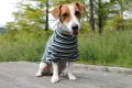<犬と生活>20%OFF!発熱保温繊維で作られたウォームマルチボーダーTシャツ 4号(無料お名前刺繍入れ可)
