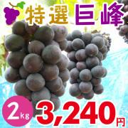 特撰巨峰2kg 【発送期間】8月上旬〜10月上旬ごろ