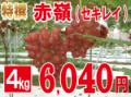 特撰赤嶺4kg 【発送期間】9月上旬〜10月上旬